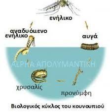 Μπιλόγκος Κυκλός Κουγιουπίου