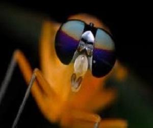pos na apomakrinete ta entoma apo to spiti