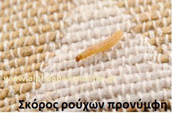 Καταπολέμηση σκόρου ρούχων