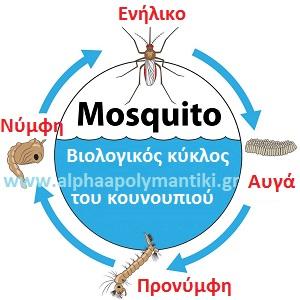 Επιπτώσεις από τα κουνούπια
