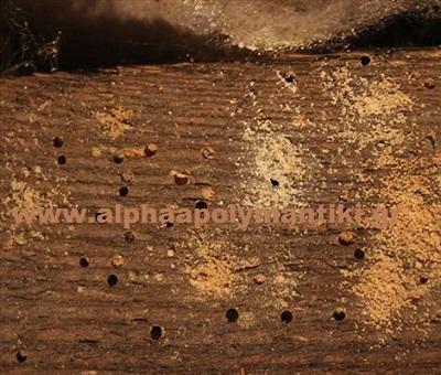 Προσβολές από ξυλοφάγα έντομα