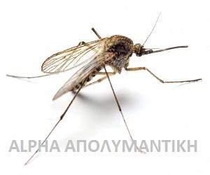 Κουνούπια Ανωφελές