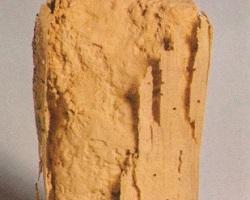 σαράκι lyctus bruneus