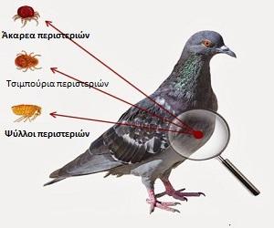 Ασθένειες πτηνών