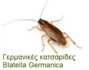 Γερμανικές κατσαρίδες – BlatellaGermanica